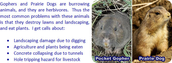 How To Get Rid Of Gophers In Your Garden And Yard