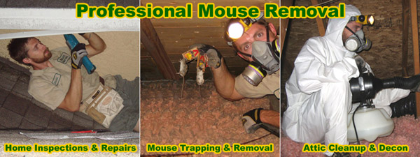 How To Get Rid Of Mice In The House Attic Garage Walls