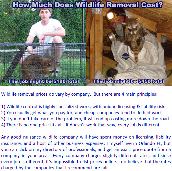 How Much Does Wildlife Removal And Pest Control Cost
